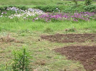 2013.06.06 みのる農園 006