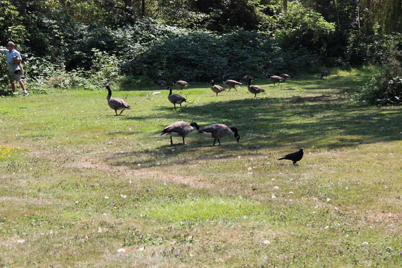 スタンレーパーク 46…鳥たち