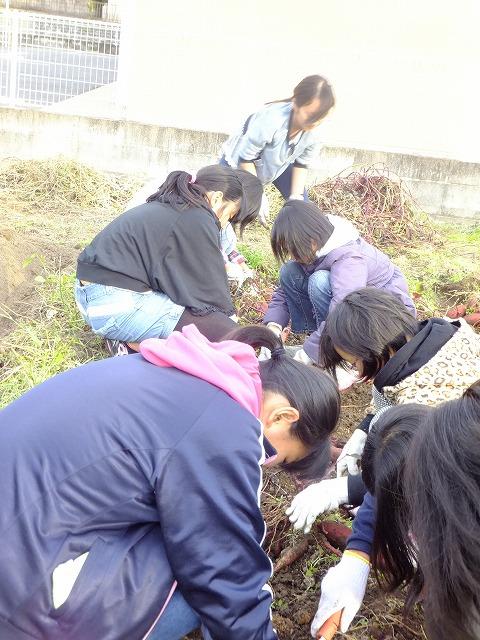 2013.11.24 みのる農園フェスタ 006