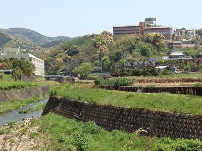 2013.4.19 古賀藤棚 001