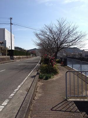 2013.2.03 八郎川を巡るウォーク 007