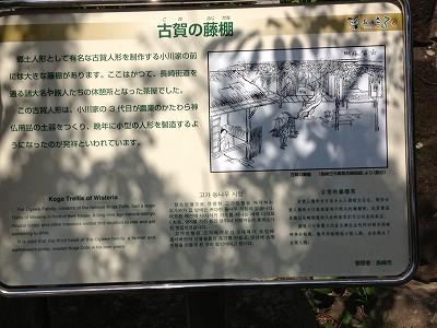 2013.4.19 古賀藤棚 004