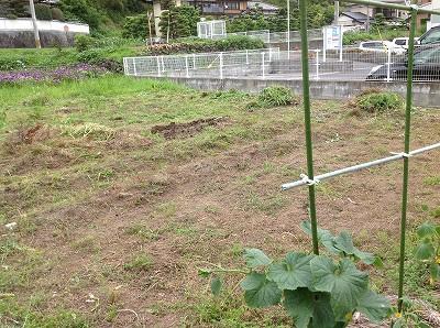 2013.06.06 みのる農園 001