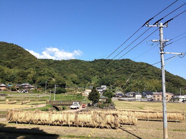 2013.10..22 稲刈りのタイプ1
