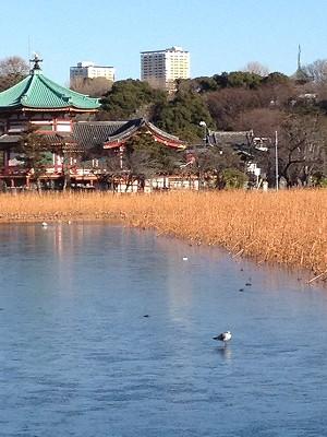 2013.1.27,28 上野公園 002