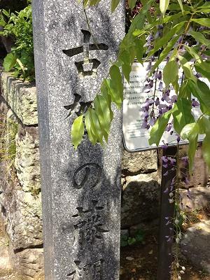 2013.4.19 古賀藤棚 003