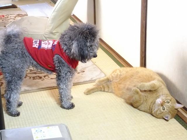 2014.01.31 スカイ君とモンちゃん 001